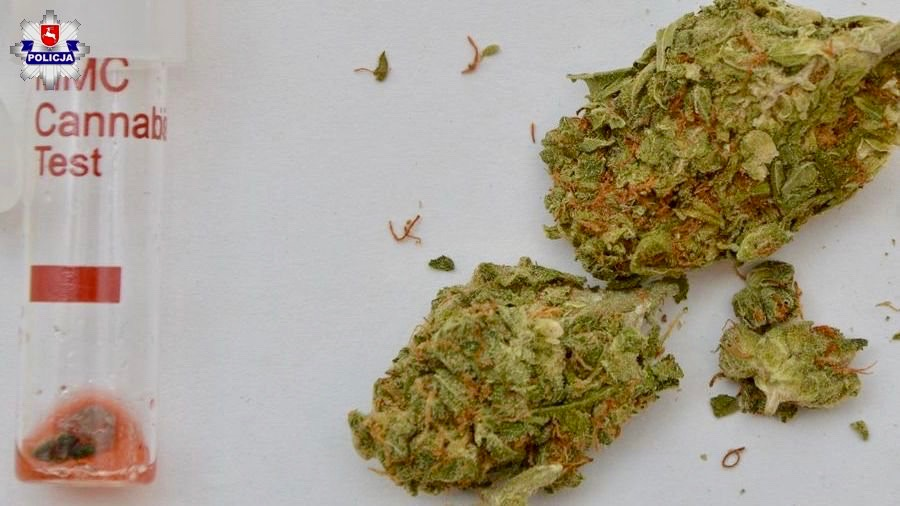 361 144430 Sprawca kolizji przewoził marihuanę (ZDJĘCIA)