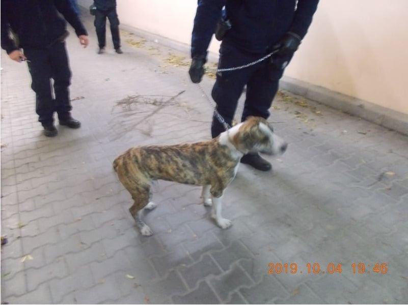 zrzut ekranu 2019 10 9 o 10 56 59 Zamość: Pies uwięziony w podziemnym garażu. Na ratunek ruszyły służby mundurowe
