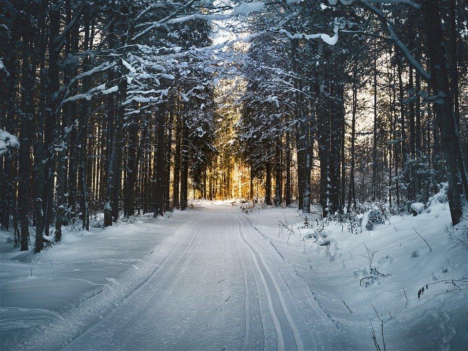 cross country skiing 2065439 960 720 Poczuj magię i piękno biegania zimą na Roztoczu