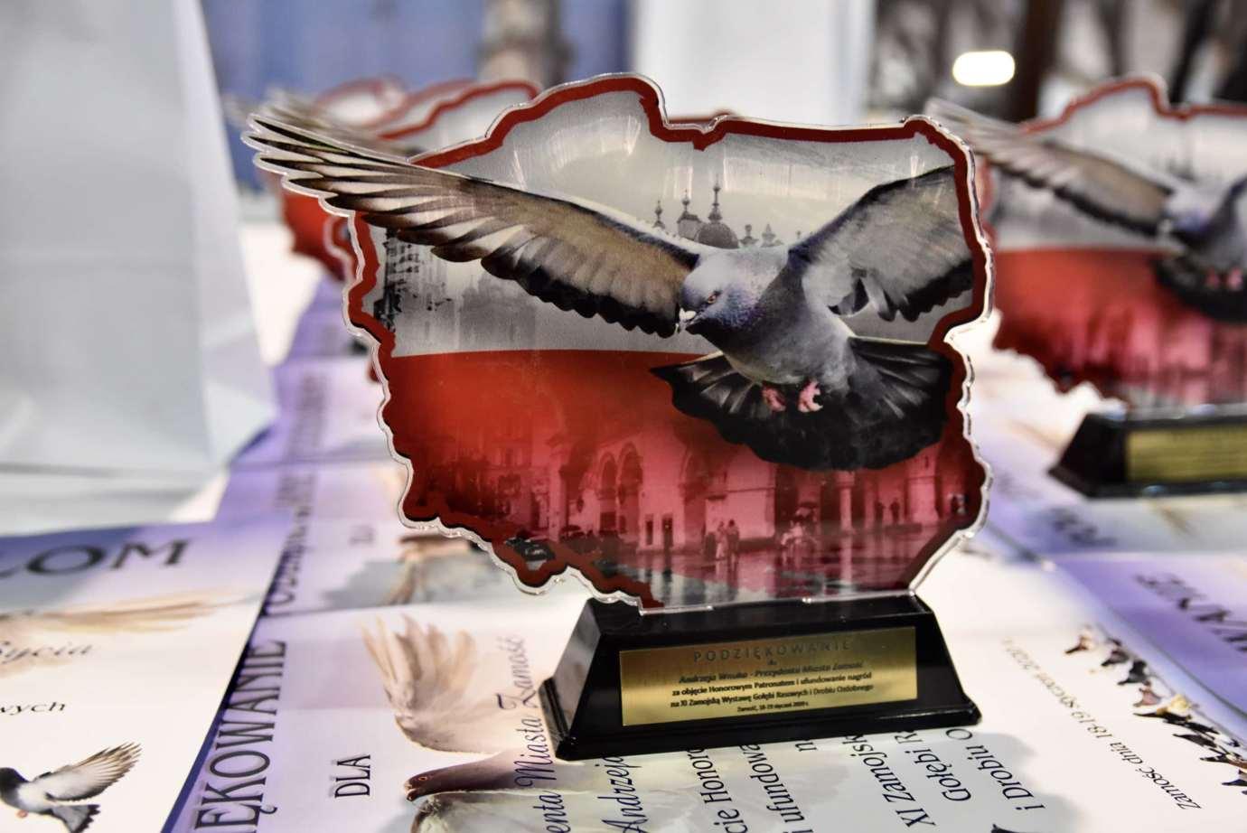 dsc 3653 XI Zamojska Wystawa Gołębi Rasowych i Drobiu Ozdobnego - publikujemy nazwiska i zdjęcia nagrodzonych