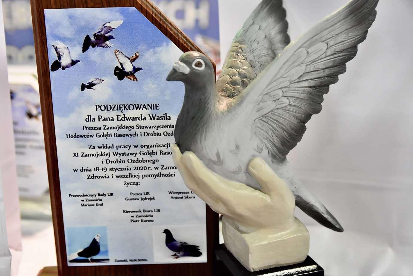 dsc 3654 XI Zamojska Wystawa Gołębi Rasowych i Drobiu Ozdobnego - publikujemy nazwiska i zdjęcia nagrodzonych