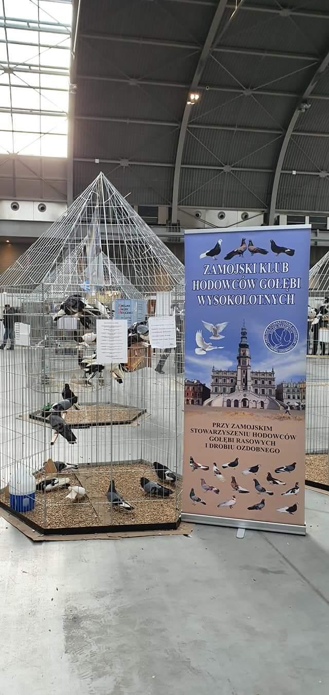 fb img 1580104874839 Zamojscy gołębiarze przywieźli z Kielc cenne trofea [ZDJĘCIA]