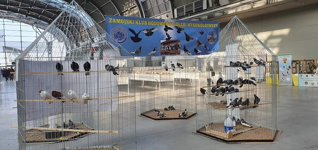 fb img 1580104893316 Zamojscy gołębiarze przywieźli z Kielc cenne trofea [ZDJĘCIA]