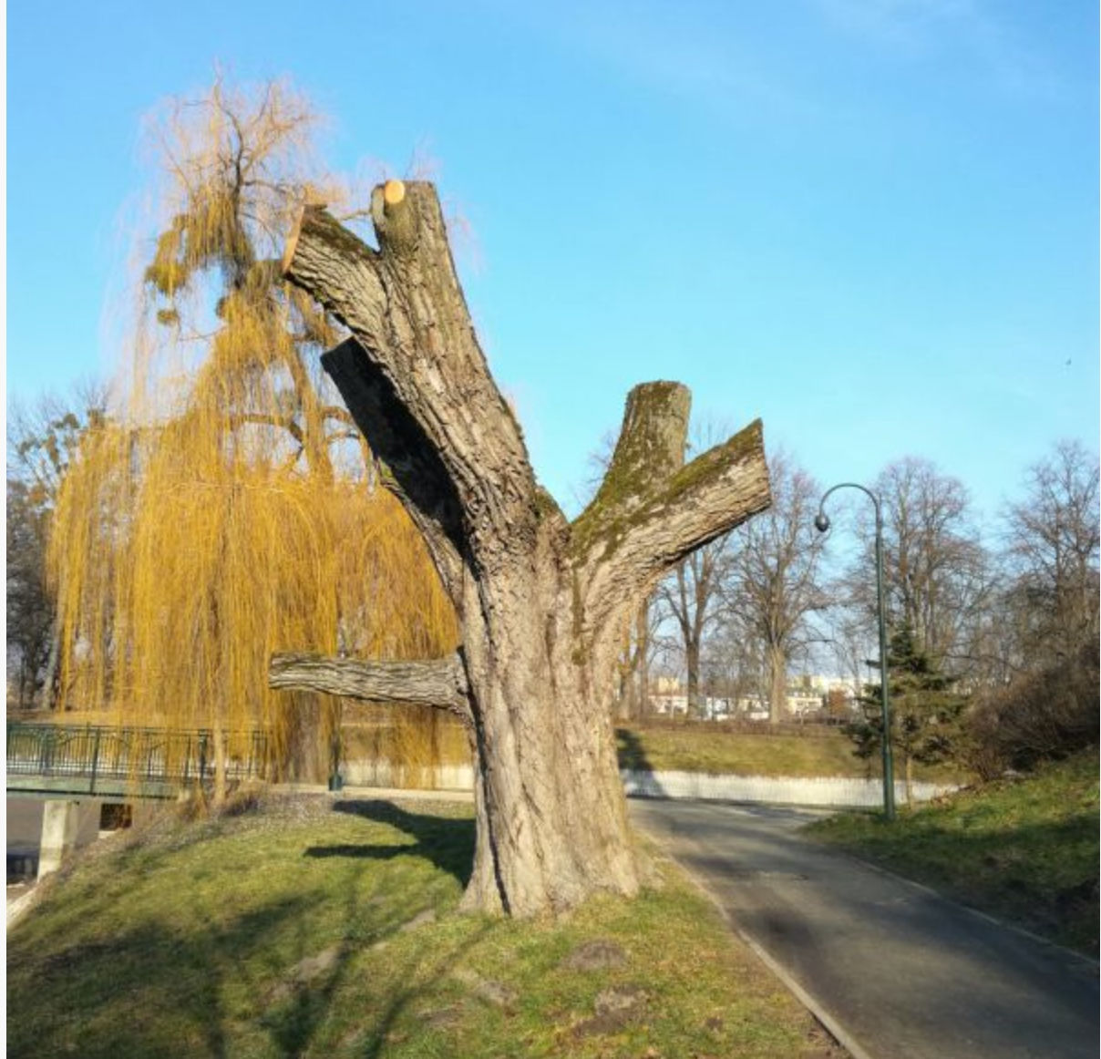 zrzut ekranu 2020 01 16 o 11 55 03 Zamość: W pniu drzewa powstanie czytelnia. Jak Wam się podoba pomysł?