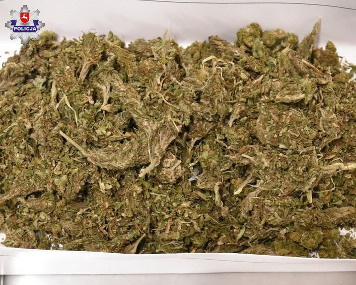68 163009 Policjanci już na korytarzu poczuli zapach marihuany.