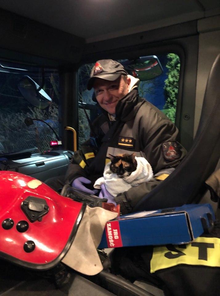 kot3 Gm. Zamość: Strażacy uratowali z pożaru domu trzy koty. Podali im tlen [ZDJĘCIA]