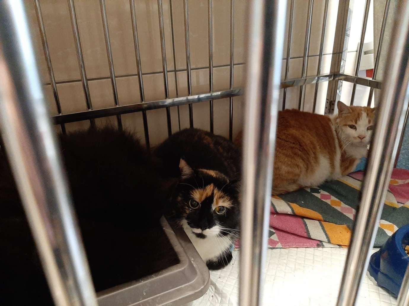 kot5 Gm. Zamość: Strażacy uratowali z pożaru domu trzy koty. Podali im tlen [ZDJĘCIA]