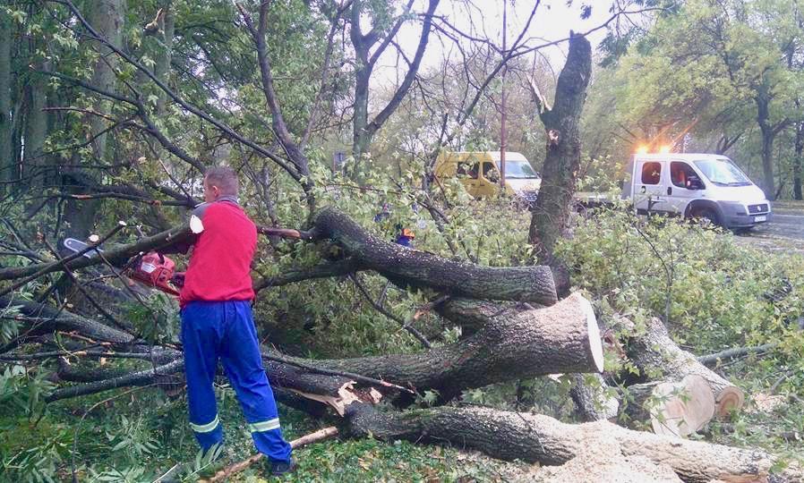 wichura Połamane drzewa, uszkodzenia dachów - podsumowanie zdarzeń z dzisiejszej nocy
