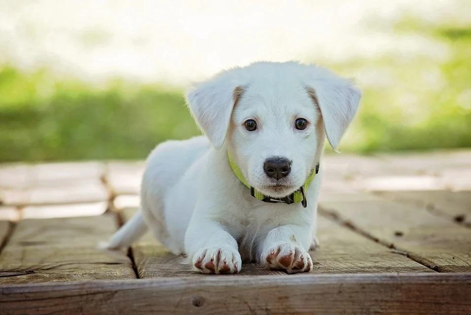 czip Zamość: Mieszkańcy mogą bezpłatnie zaczipować swojego psa
