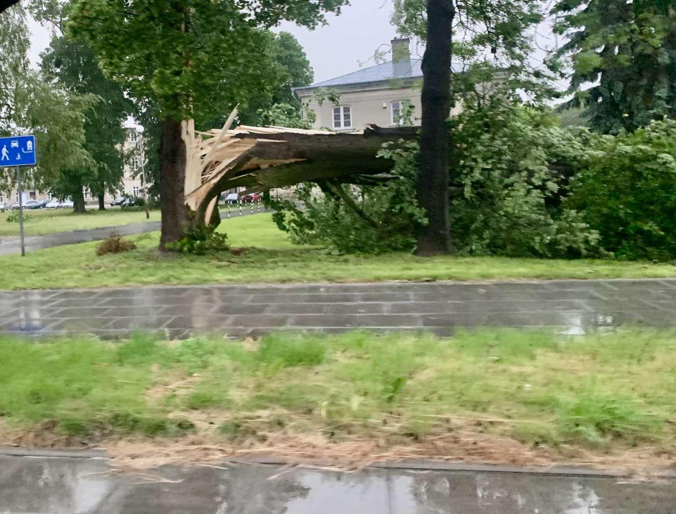 img 9519 3 uszkodzone auta na Królowej Jadwigi, powalone drzewa. Kolejne zdjęcia i FILM
