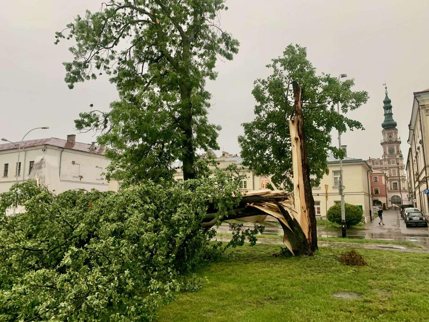 img 9521 3 uszkodzone auta na Królowej Jadwigi, powalone drzewa. Kolejne zdjęcia i FILM