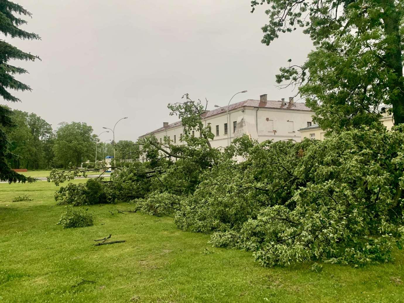 img 9522 3 uszkodzone auta na Królowej Jadwigi, powalone drzewa. Kolejne zdjęcia i FILM