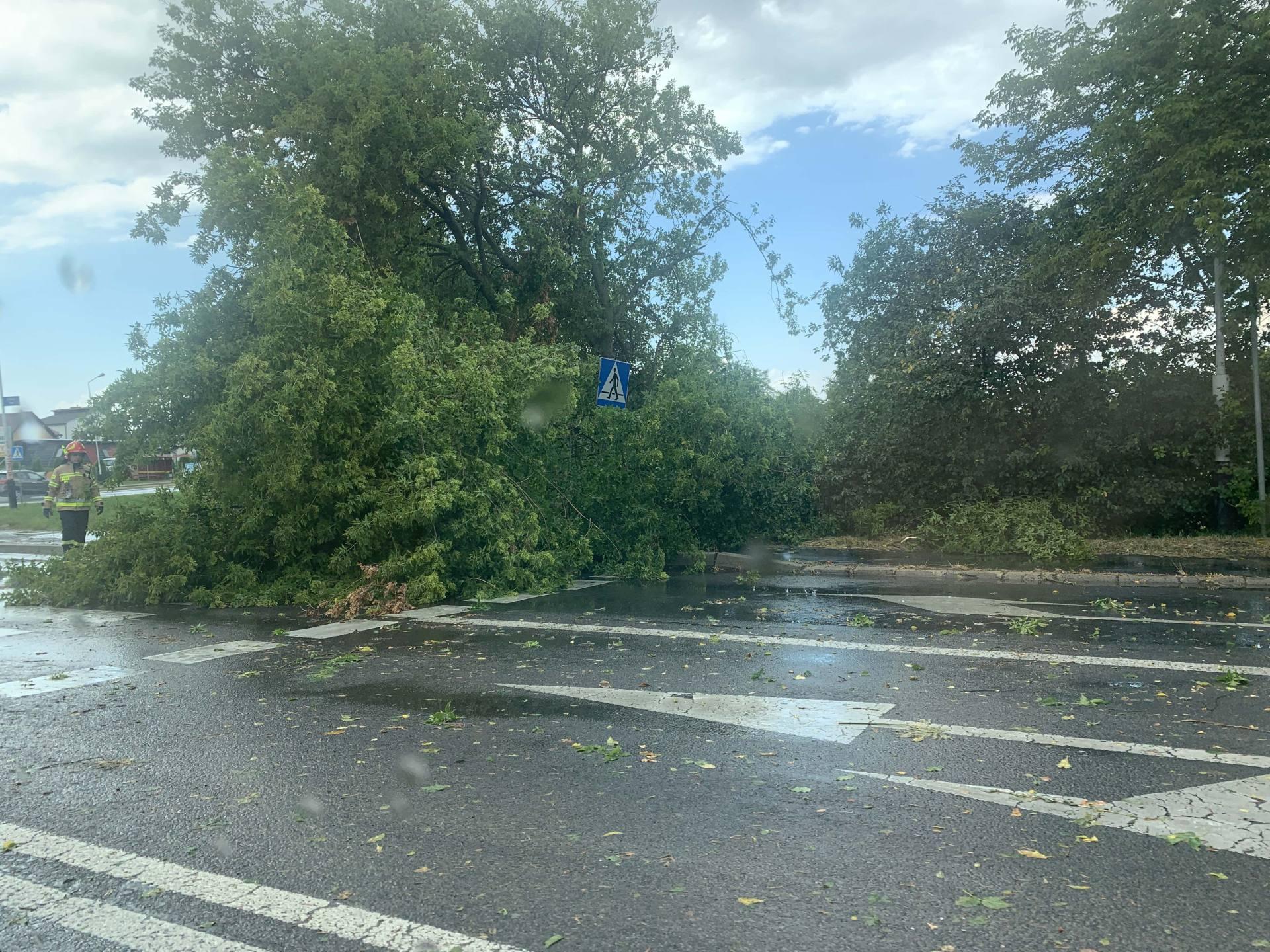 img 0944 Zerwane dachy, połamane drzewa, uszkodzone samochody. Straty po burzy, która przeszła nad Zamojszczyzną