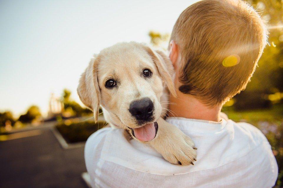 adorable 3344414 960 720 Zamość: Zaczipuj swojego psa na koszt miasta