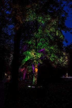 121155299 2692149074405927 7277070225797779202 o Pokaz iluminacji w Parku Miejskim [ZDJĘCIA]