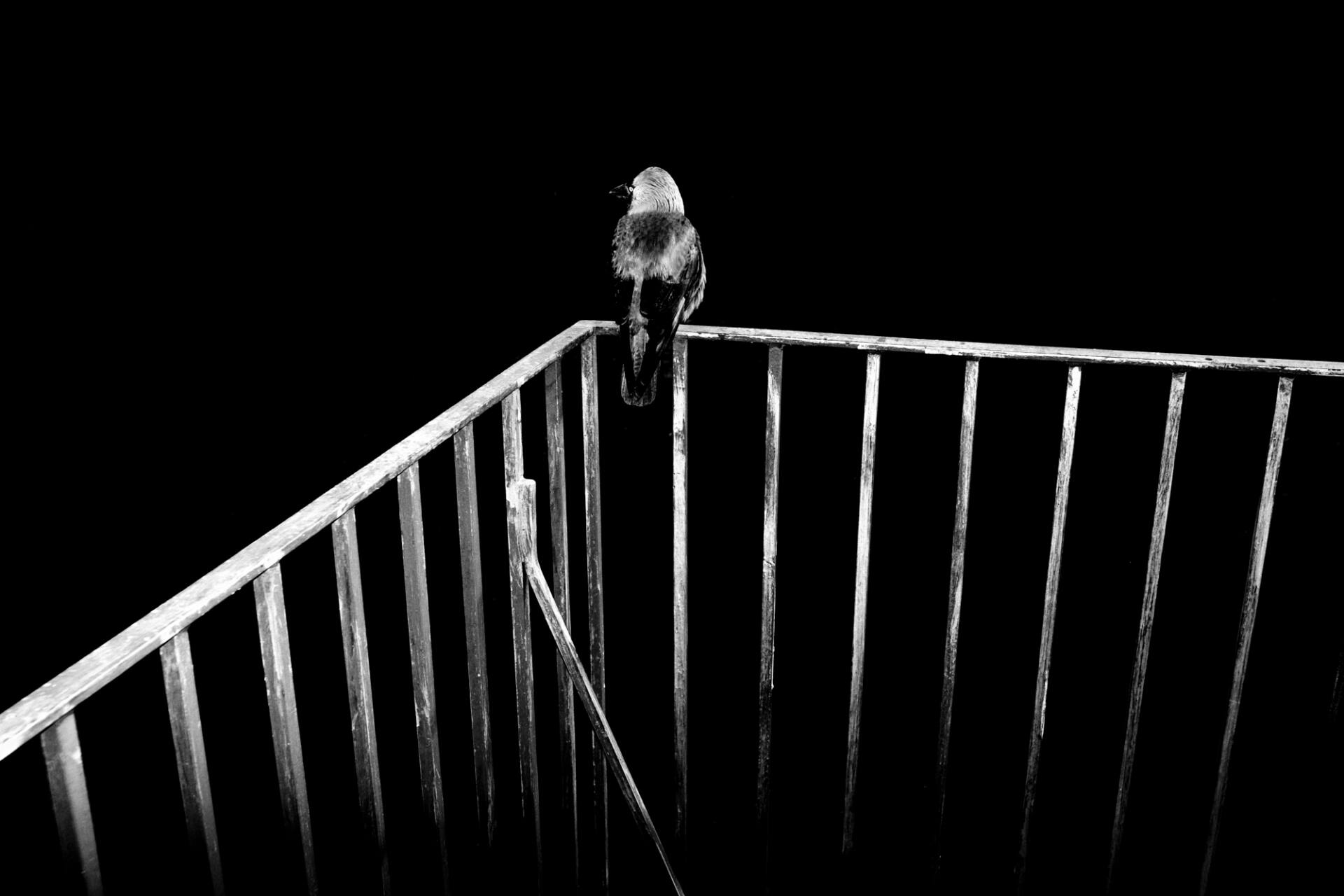 Zamość: Otwarcie wystawy fotografii Bartka Krężołka pt. MUTE.