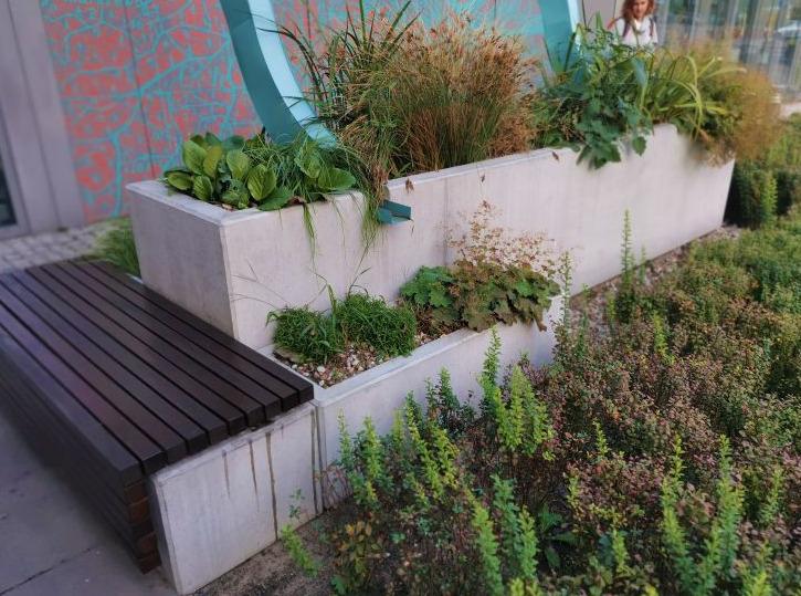 zam Warsztaty z zakładania ogrodów deszczowych