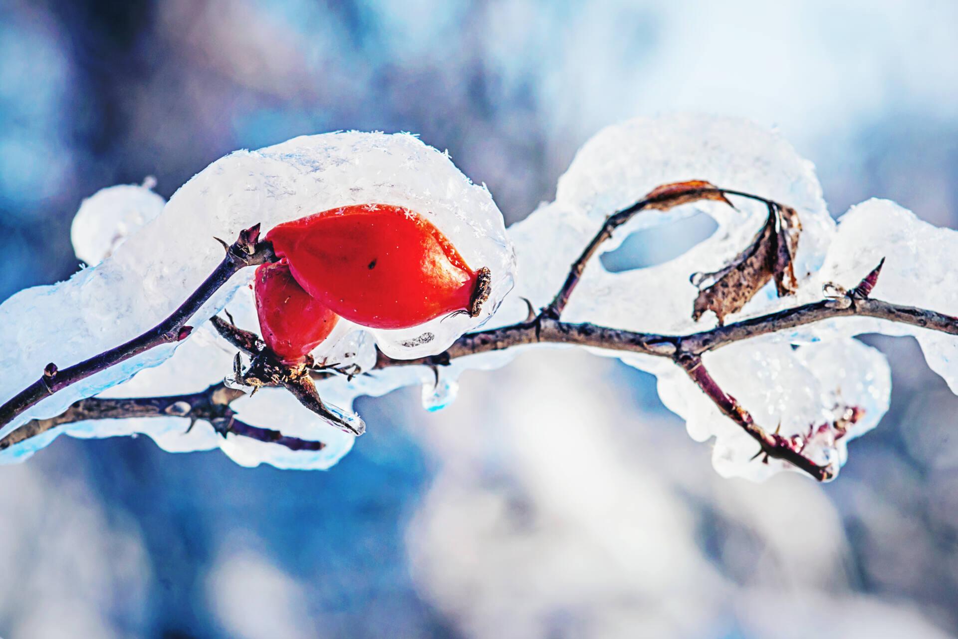 dsc00516 Trwa zimowy foto-konkurs. GOK Gminy Zamość zaprasza do zabawy!