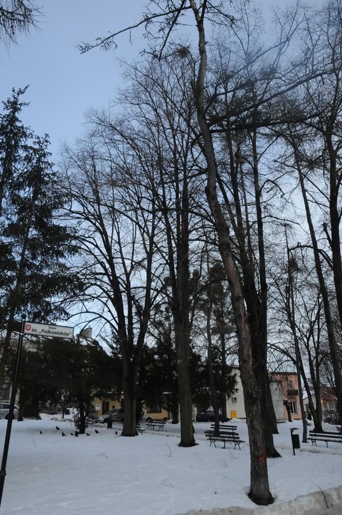 wycinka drzew plac tadeusza kosciuszki rys 1 Wytną drzewa, ale posadzą nowe