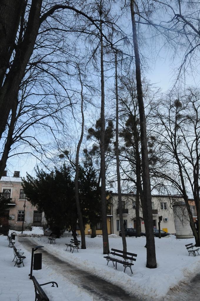 wycinka drzew plac tadeusza kosciuszki rys 2 Wytną drzewa, ale posadzą nowe
