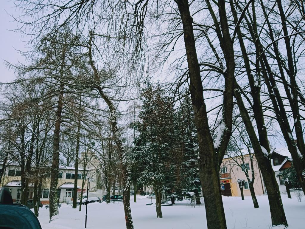 wycinka drzew plac tadeusza kosciuszki rys 4 Wytną drzewa, ale posadzą nowe
