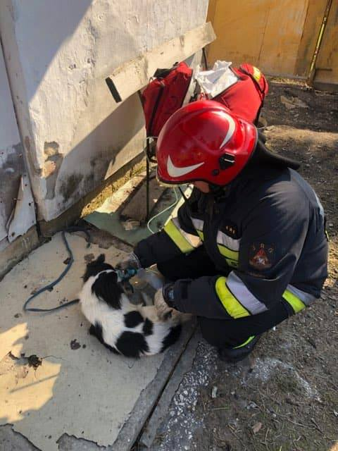 bialowola 3 Tragiczne zdarzenie. Strażakom udało się uratować jedynie psa.