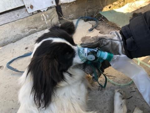bialowola 4 Tragiczne zdarzenie. Strażakom udało się uratować jedynie psa.
