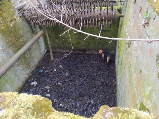 komarow pies Pies wpadł do głębokiego zbiornika. Ratowali go strażacy