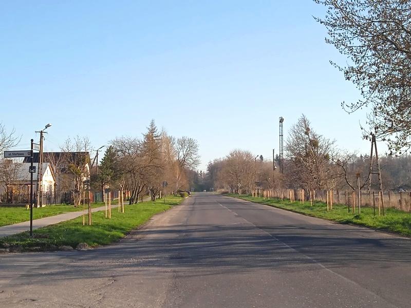 news img 441 726 1619435934 W Szczebrzeszynie przybyło drzew.