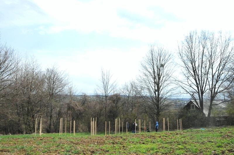 news img 441 728 1619435934 W Szczebrzeszynie przybyło drzew.