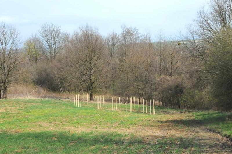 news img 441 733 1619435934 W Szczebrzeszynie przybyło drzew.