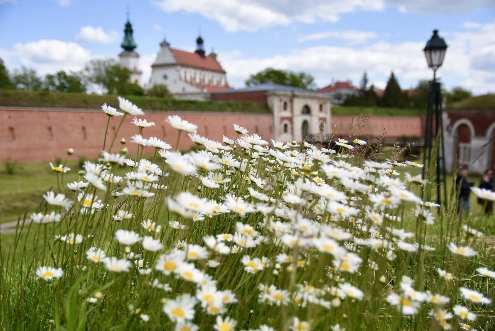 83496853 2687764278160359 4595699982647951360 n Znamy najbardziej zielone miasta w Polsce. Na którym miejscu Zamość?