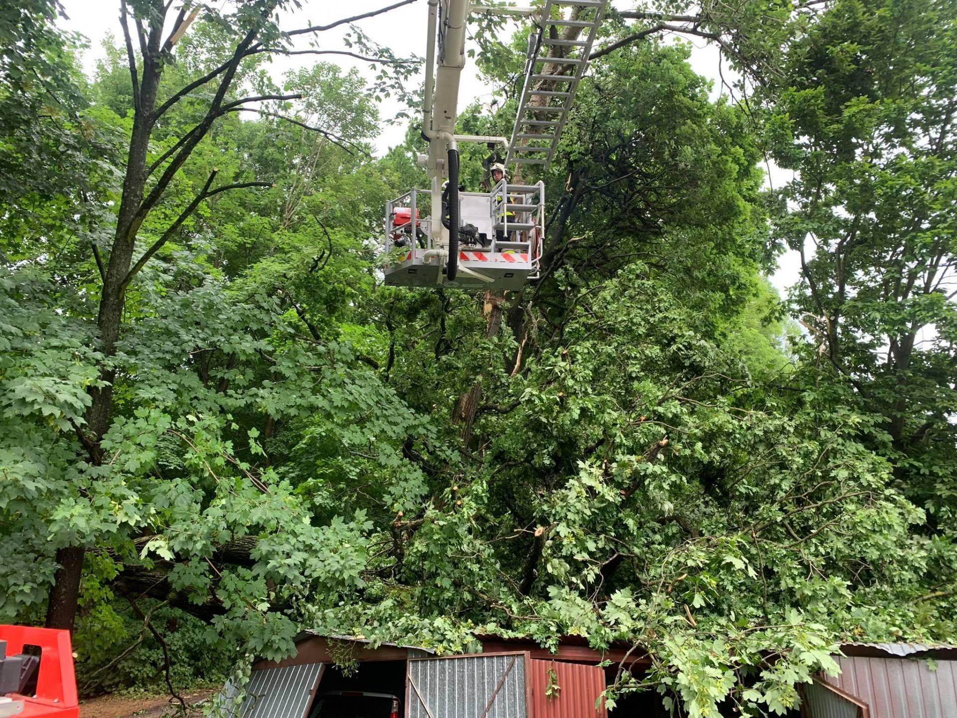 drzewo 3 Gwałtowne burze w Zamościu i regionie. 88 interwencji strażaków