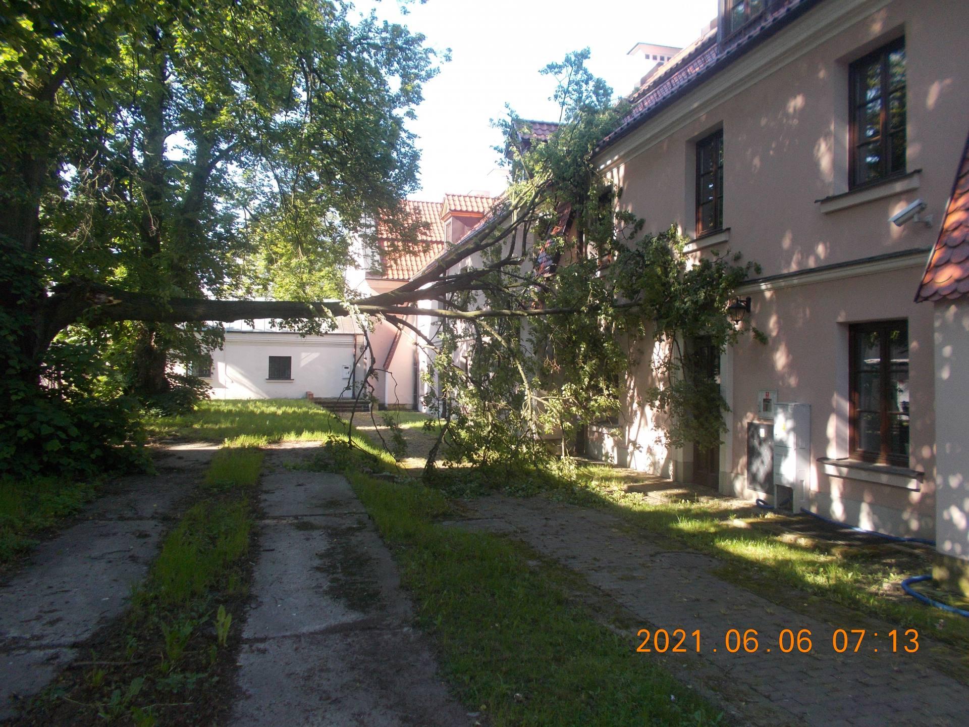 fot straz miejska Zamość: Przewrócone drzewo