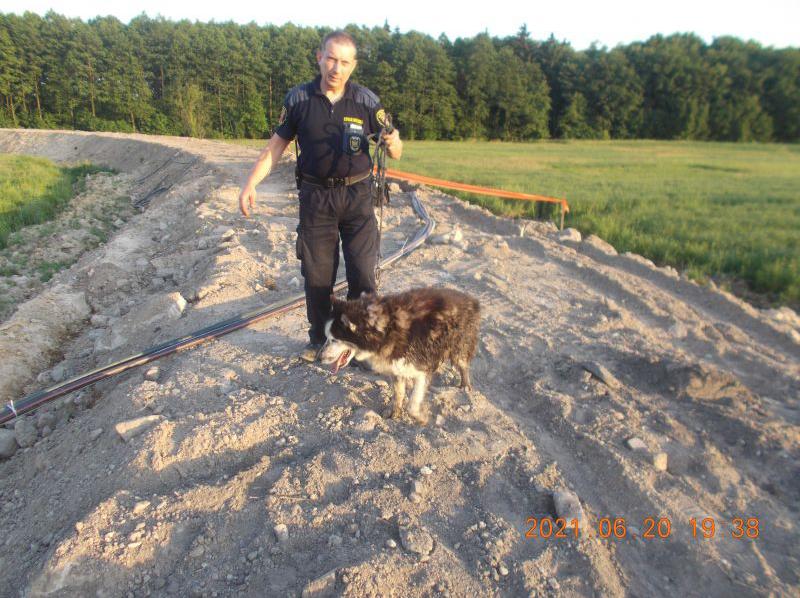 zrzut ekranu 2021 06 21 o 095111 ZAMOŚĆ: Strażnicy miejscy uratowali psa przed niechybną śmiercią