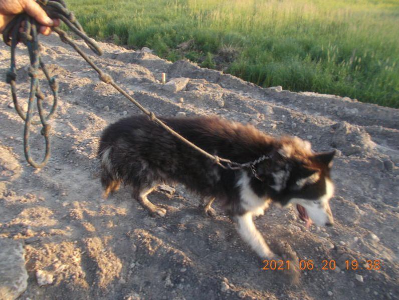 zrzut ekranu 2021 06 21 o 095152 ZAMOŚĆ: Strażnicy miejscy uratowali psa przed niechybną śmiercią