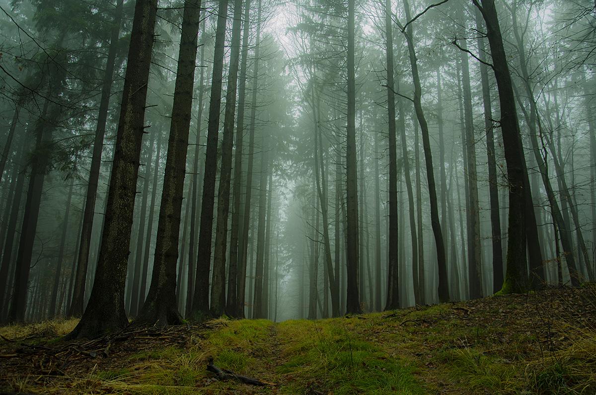 ciechanowski szymon las we mgle ZAMOŚĆ: Znamy wyniki konkursu fotograficznego